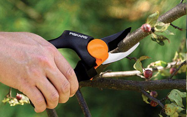 Astuces pour bien tailler les arbustes