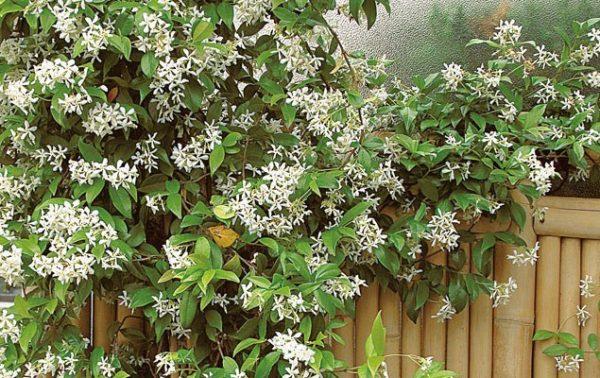 Un mur fleuri en été, vert en hiver