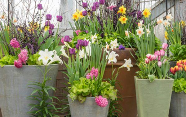 Bulbes à fleurs, faciles et irrésistibles !