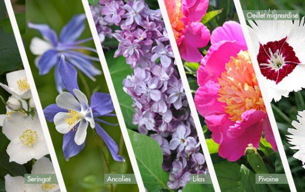 Fleurs pour petit jardin : les indémodables