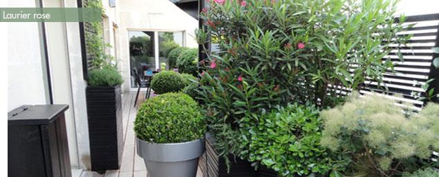 Fleurs En Pots Pour Balcon Et Terrasse My Little Jardin