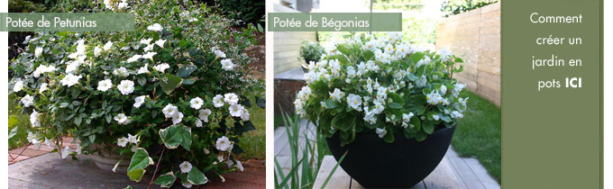 Fleurs en pots pour balcon et terrasse - My Little Jardin