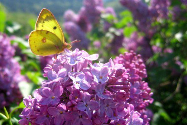 Les 10 conseils jardin d'Avril