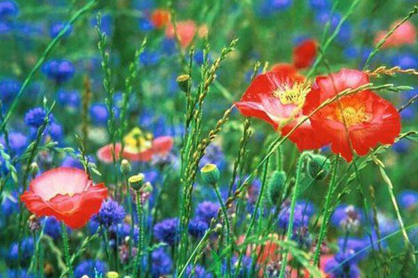 Jardin de ville et fleurs des champs
