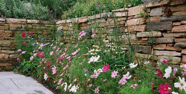 Jardin de ville et fleurs des champs - My Little Jardin