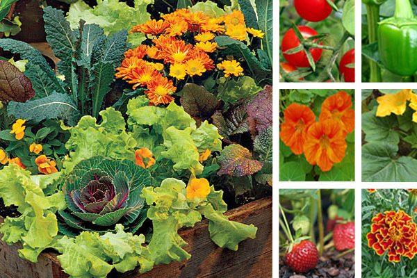 Jardin potager, le mariage fleurs et légumes