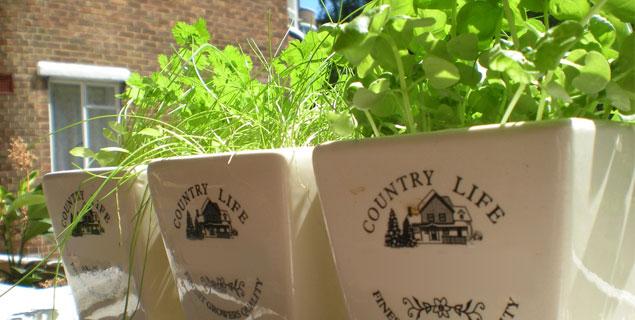 3 Plantes Aromatiques Faciles A Cultiver En Pots My Little
