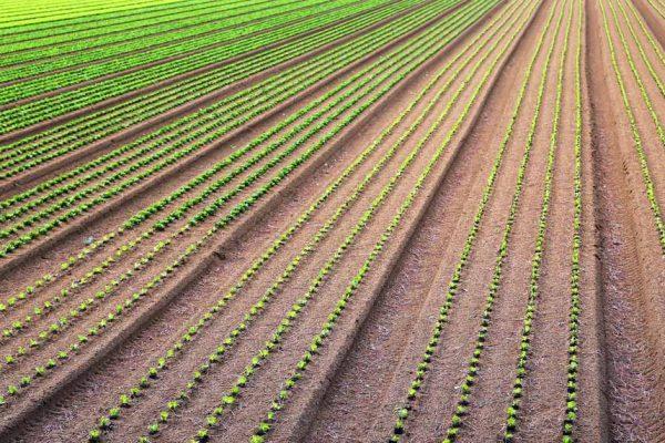 Agriculture biointensive : comment l'appliquer au jardin ?