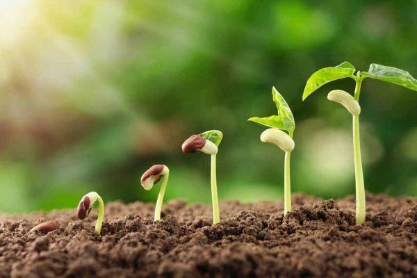 Comment faire germer des graines ?