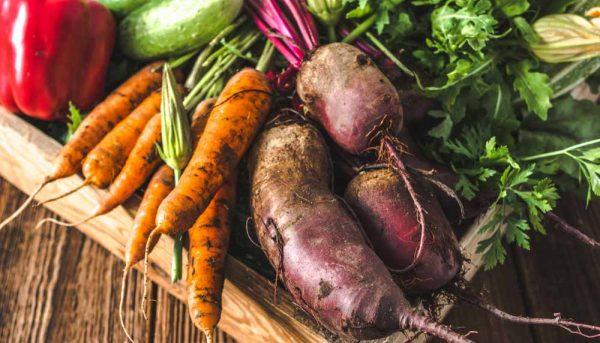 Les légumes les plus faciles à cultiver