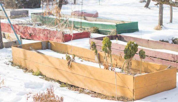 Comment conserver ses fruits et légumes pour l'hiver