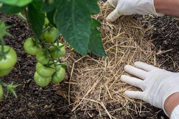 Nos astuces pour le paillage du jardin