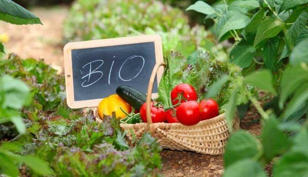 Pourquoi manger bio ? Les 4 principales raisons