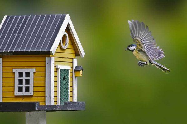 Nichoir pour oiseaux
