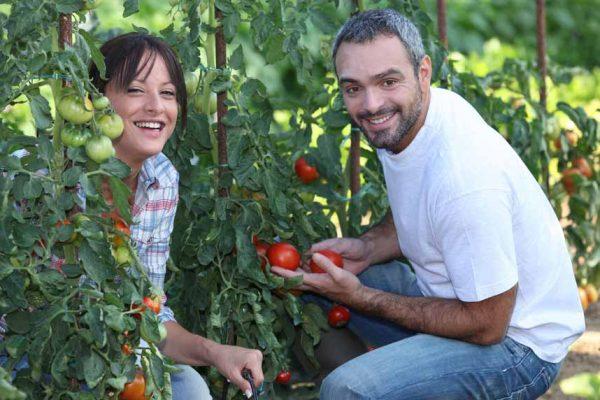 Économiser en jardinant : lier l'utile et l'agréable