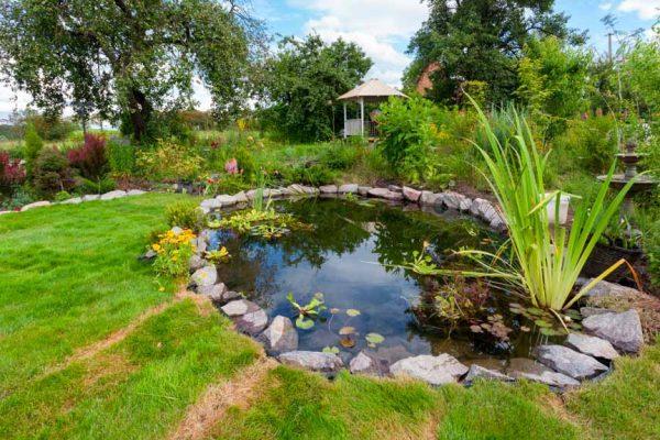 Biodiversité au jardin : comment la maximiser ?