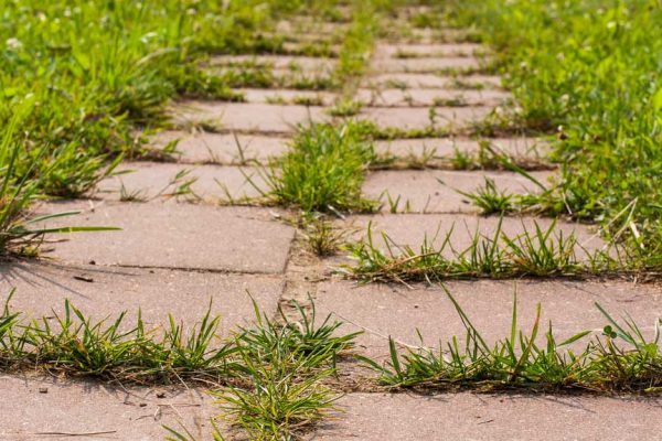 Comment désherber les mauvaises herbes